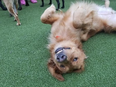 camp-canine-provides-clean-fun-space-for-dogs