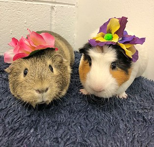pets-of-the-week-frieda-and-peach