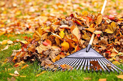 plainville-to-begin-leaf-collection-heres-what-you-need-to-know