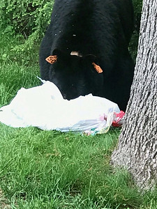 they-aint-yogi-animal-control-advises-bear-safety-this-summer