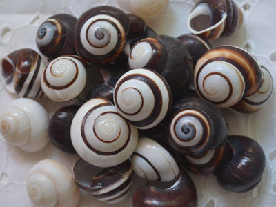 customs-agents-in-philadelphia-stop-snails-in-mail-heading-to-hartford