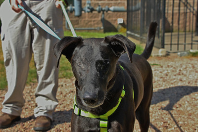 ct-humane-society-helps-older-pets-find-new-homes