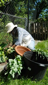 giving-garden-benefits-newington-food-bank