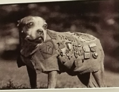 exhibit-on-sgt-stubby-showcases-war-dogs-efforts